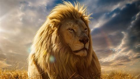 Lion King 4K Wallpapers   HD Wallpapers   ID #19926