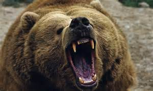 Alaska man mauled to death by bear   Daily Mail Online