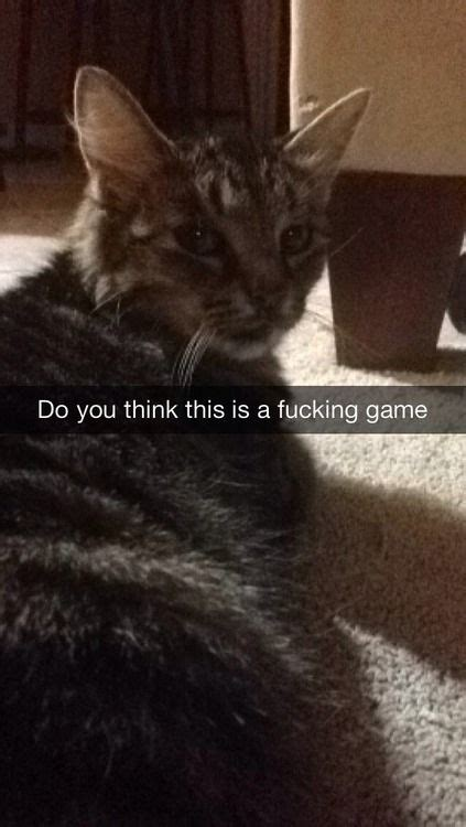 The perfectly captioned cat snap, pt