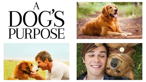 A Dog's Purpose wiki, synopsis, reviews - Movies Rankings!