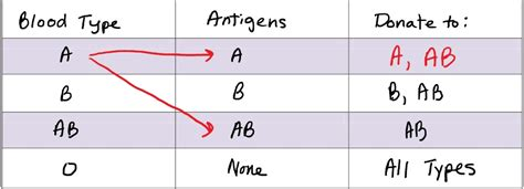 CIE Biology Paper-1 Specimen Questions with Answers 65 to
